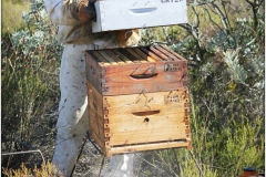 Bee-Hive-and-Beekeeper544513939ebba