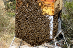 Full-Hive-of-bees544513942bd3b