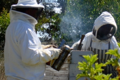 Harvesting-honey-smoker54451395c3dd8