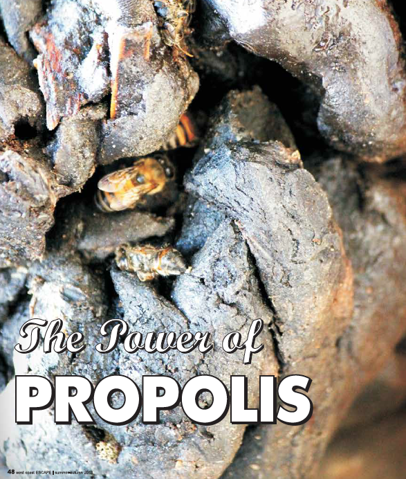 Escape Magazine Issue 10: Propolis