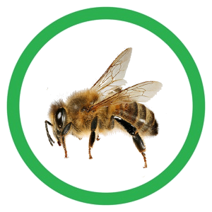 Bee icon2