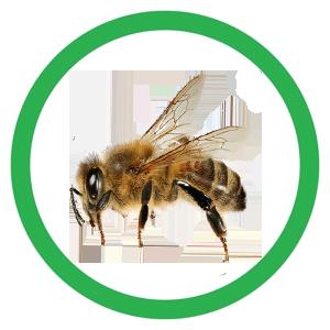 Bee icon2