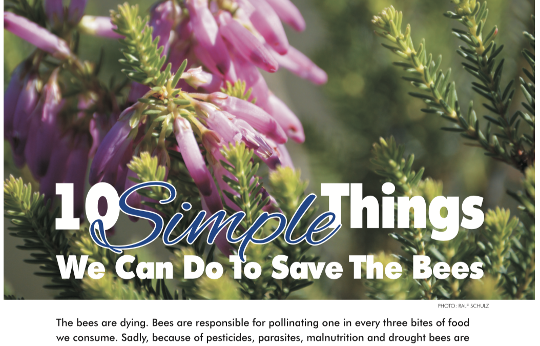 Escape Magazine Issue 15: 10 Simple things we can do to attract bees to your garden