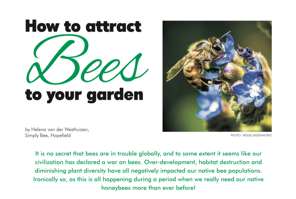 Escape Magazine Issue 14: How to attract bees to your garden