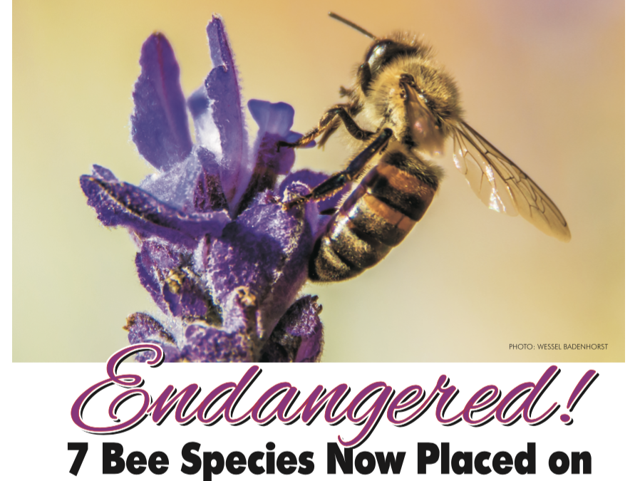 Escape Magazine Issue 16: Endangered